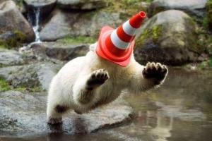 Polar-Bear-158431759626