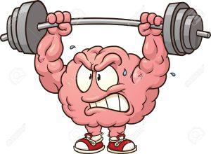 muscle cérébral